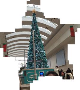 みなとみらいホール前のクリスマスツリー